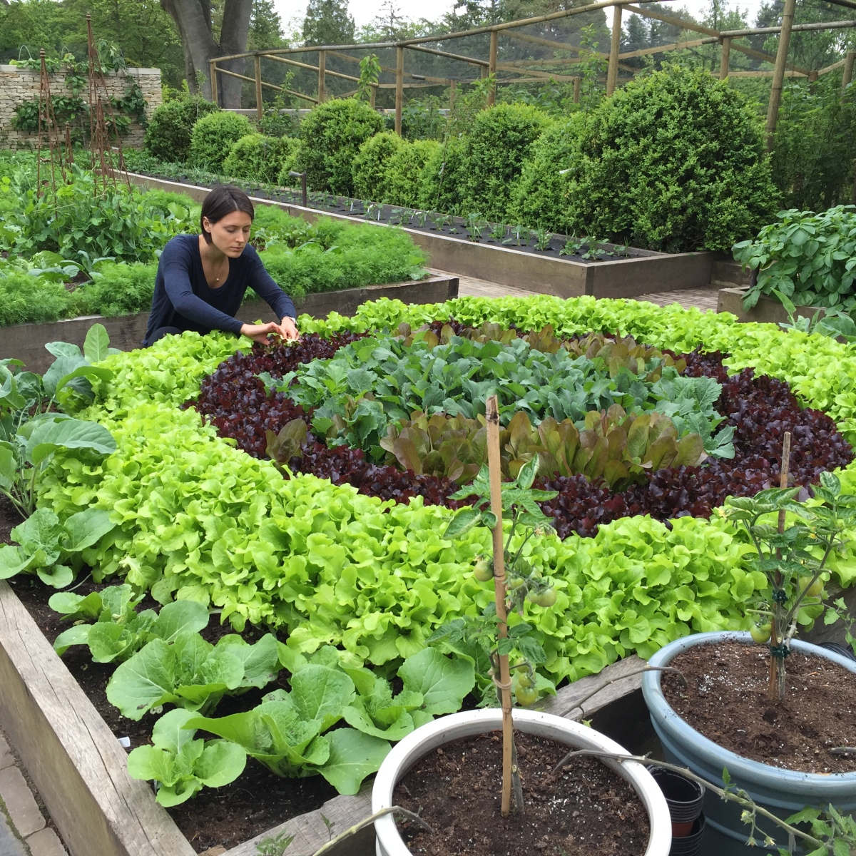 10 Components Of The Best Organic Kitchen Garden Poshveggies