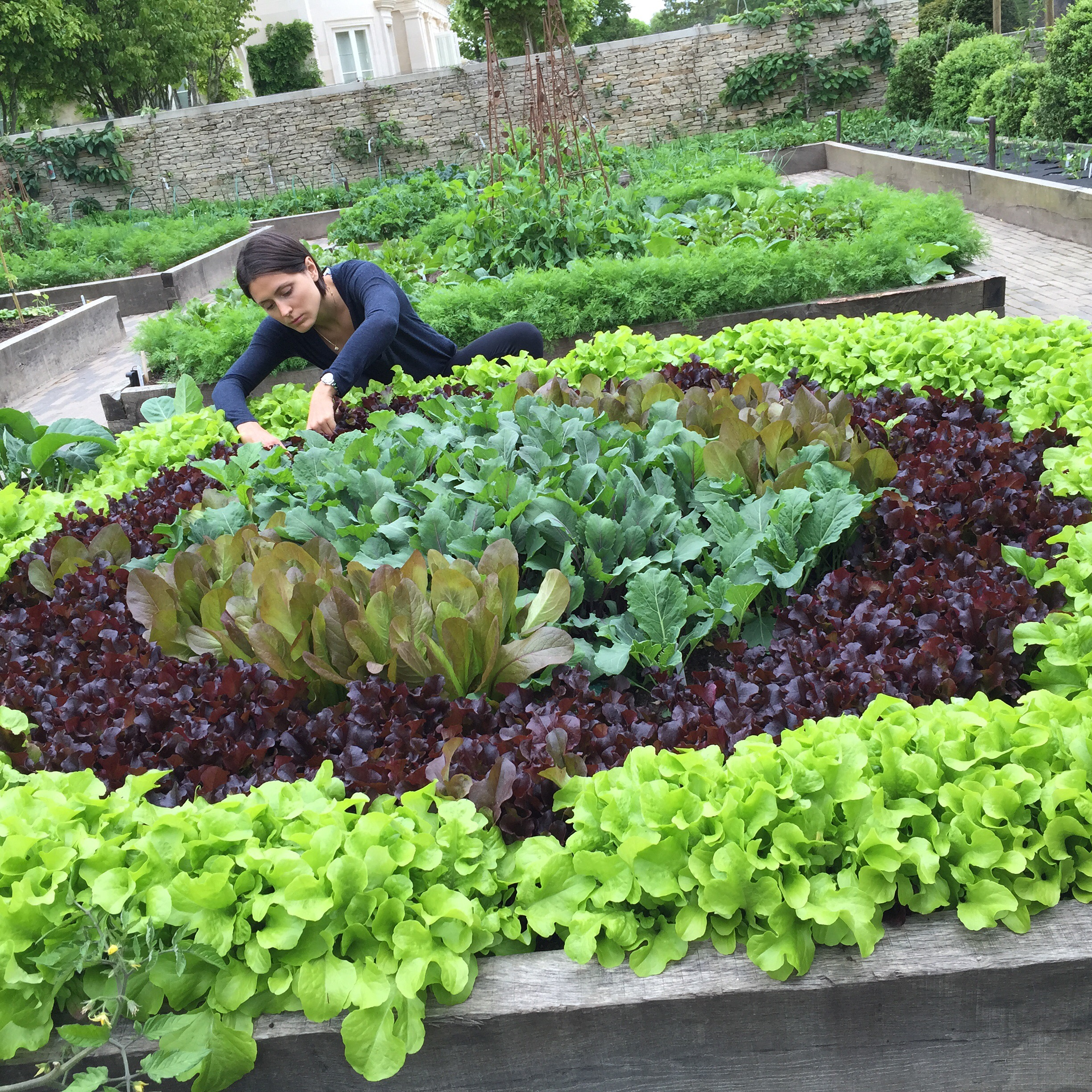 10 Components Of The Best Organic Kitchen Garden